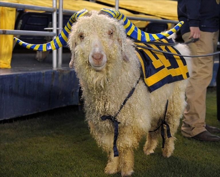 Bill Goat