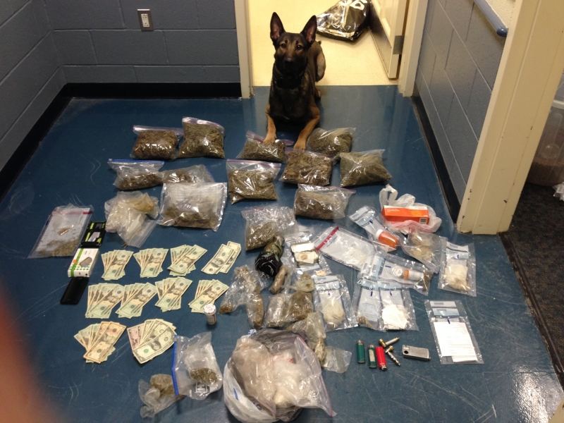 drug dog with contraband money, drugs, and paraphernalia